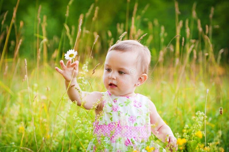 Kleines Mädchen mit dem Gänseblümchen stockfotos