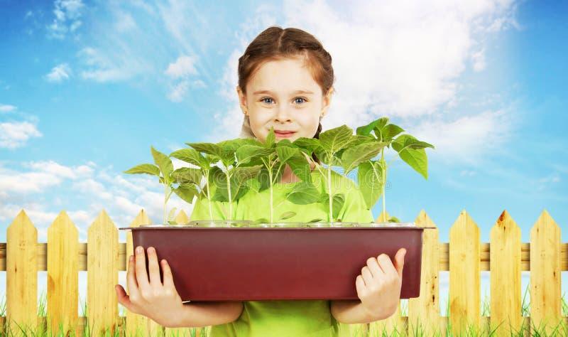 Kleines Mädchen mit einem Kasten Sämlingen nahe dem Gartenzaun stockbild