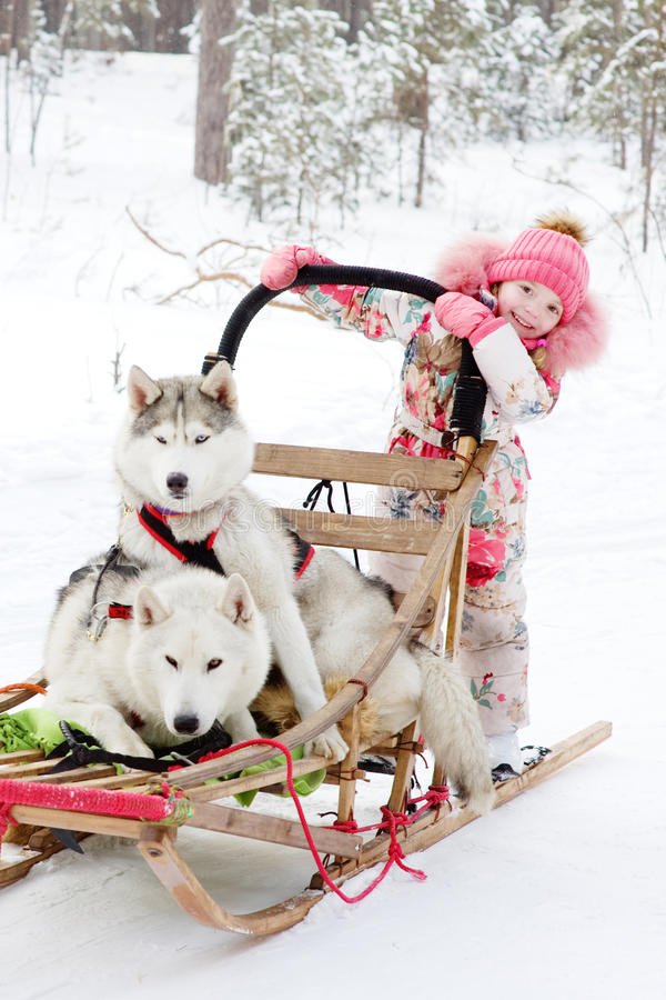 Kleines Mädchen und Schlittenhunde im Winterwald stockbilder