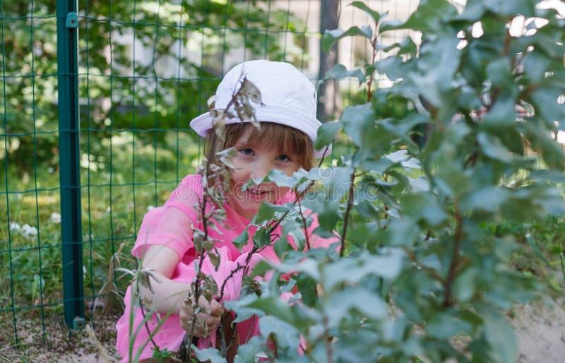Kleines Mädchen versteckt sich hinter den Buschniederlassungen im Sommer stockfotografie