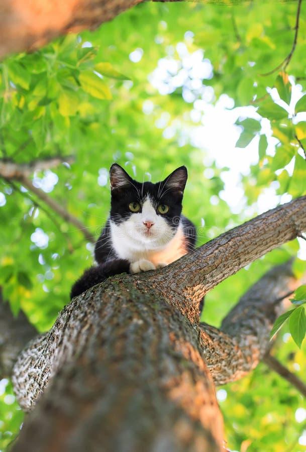 Kleines nettes Kätzchen, das hoch in einem Baum sitzt und unten in a schaut stockfotografie