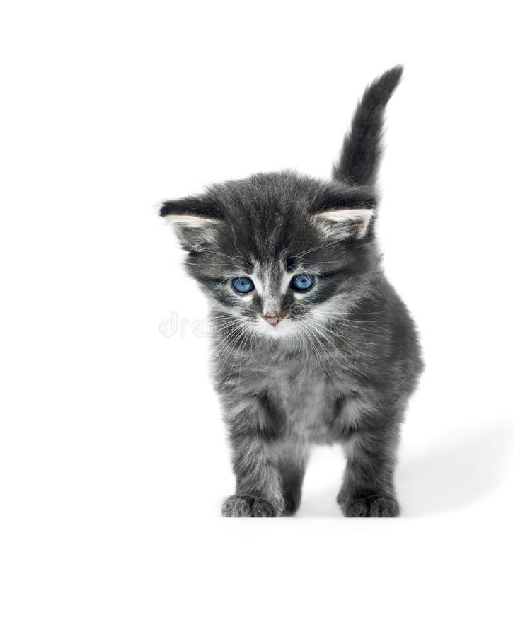 Kleines nettes Kätzchen lokalisiert stockbilder