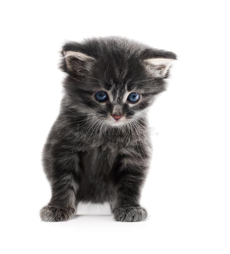 Kleines nettes Kätzchen lokalisiert lizenzfreie stockfotografie