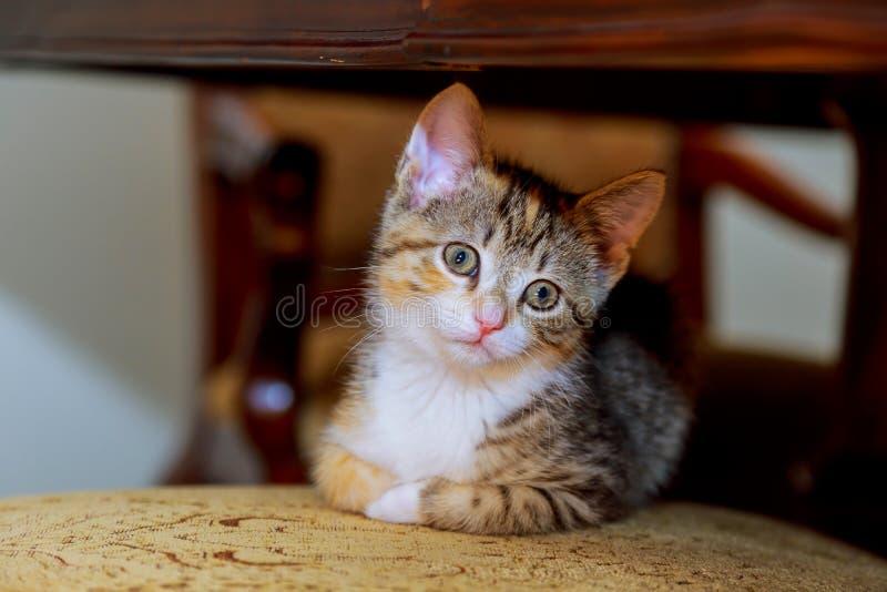 Kleines nettes Kätzchen streifte weißen Farbton mit den blauen Augen, die auf geflochtenem Stuhl sitzen lizenzfreie stockfotos