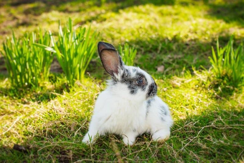 Kleines nettes Kaninchen stockbilder