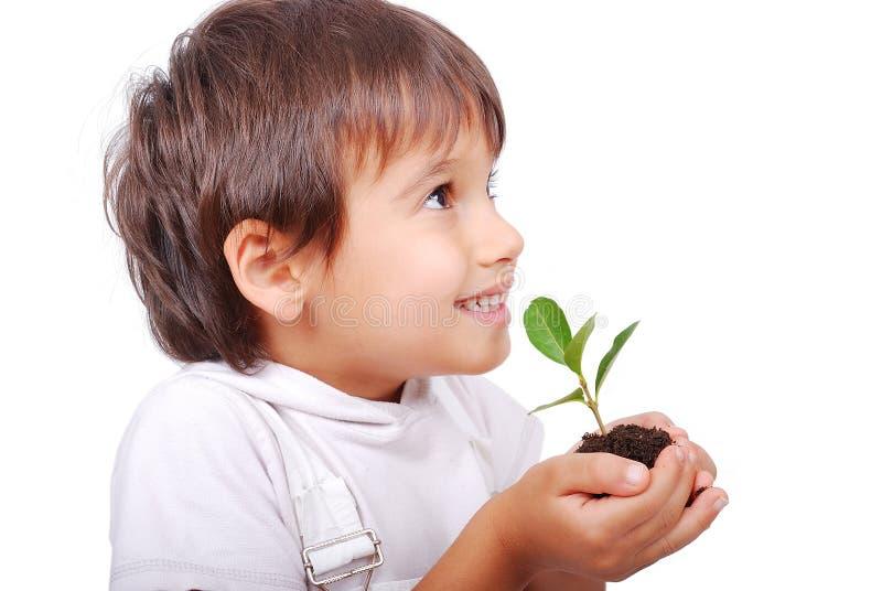 Kleines nettes Kind, das Grünpflanze anhält stockbilder