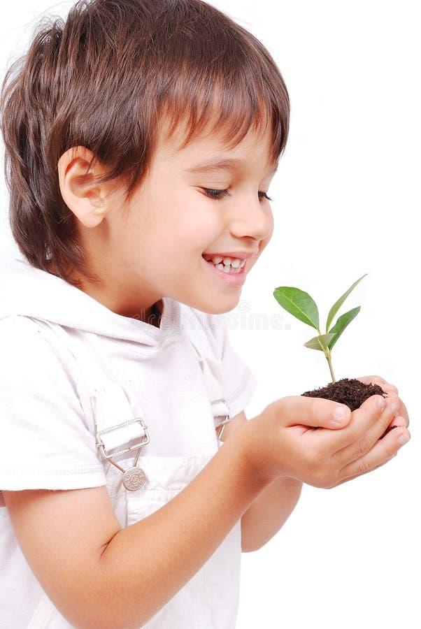 Kleines nettes Kind, das Grünpflanze in den Händen anhält lizenzfreie stockfotos