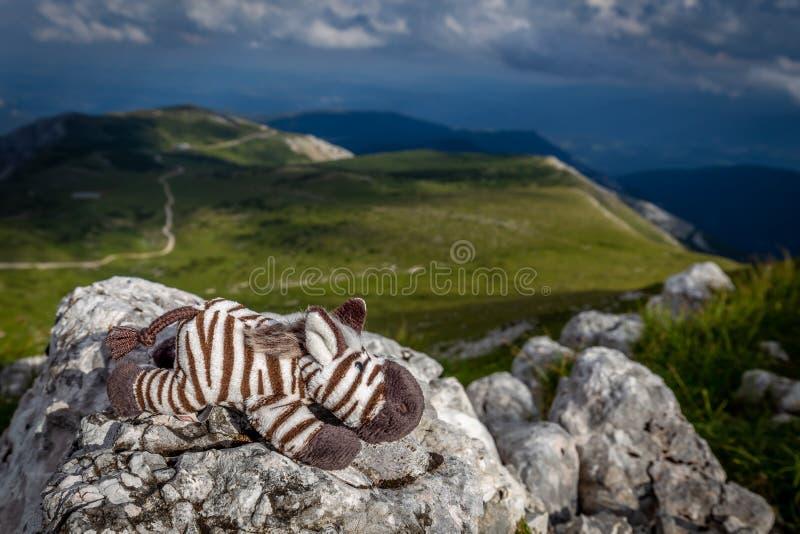 Kleines nettes Zebra, das auf den Felsen in der idyllischen, frischen, grünen, grasartigen Wiese auf der rax Hochebene legt stockfotografie