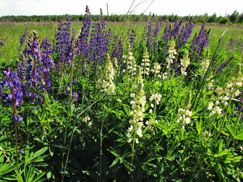 Kleines Paradies des Blumenfeldes von Ukraine stockfoto