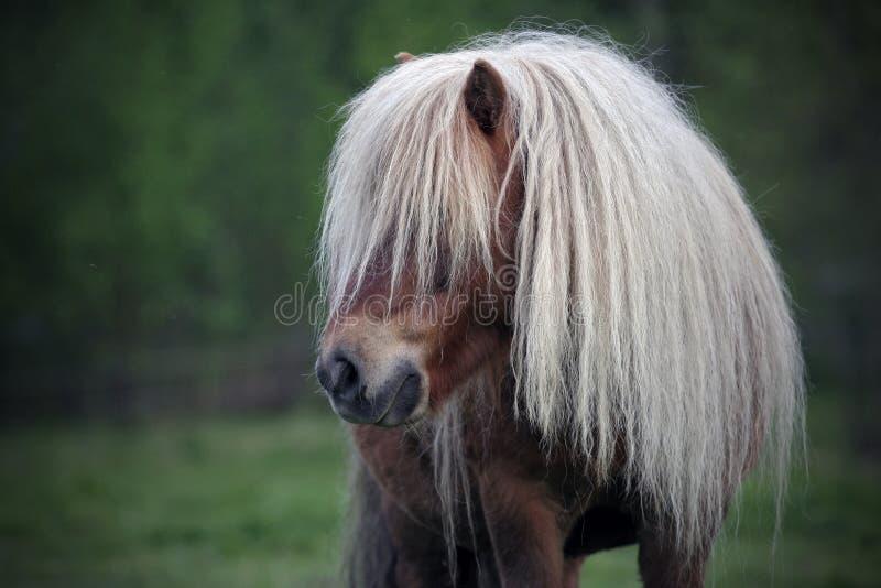 Kleines Pony lizenzfreie stockfotos