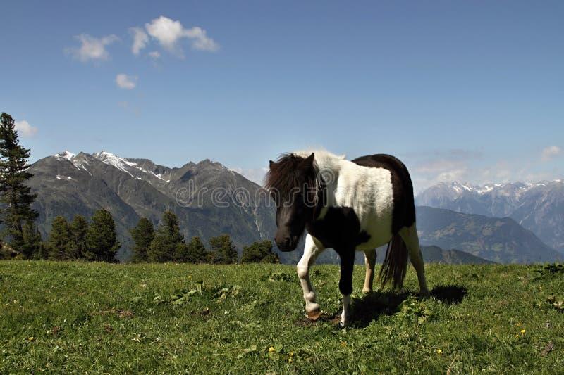 Kleines Pony stockfoto