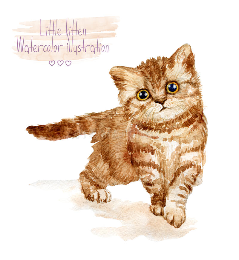 Kleines rotes flaumiges Kätzchen Beschmutzte Katze lizenzfreie abbildung