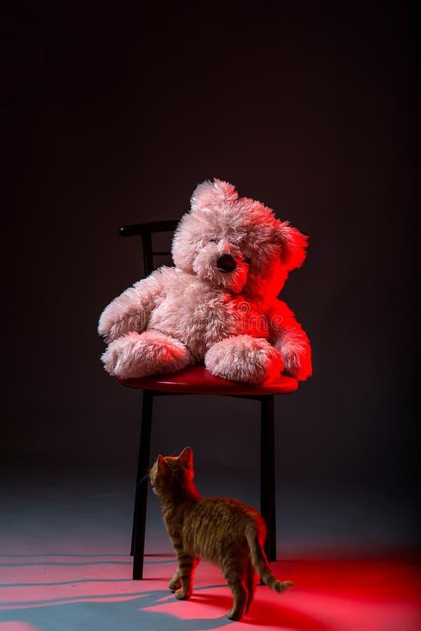 Kleines rotes Kätzchen und ein Teddybär betreffen einen grauen Hintergrund lizenzfreie stockbilder