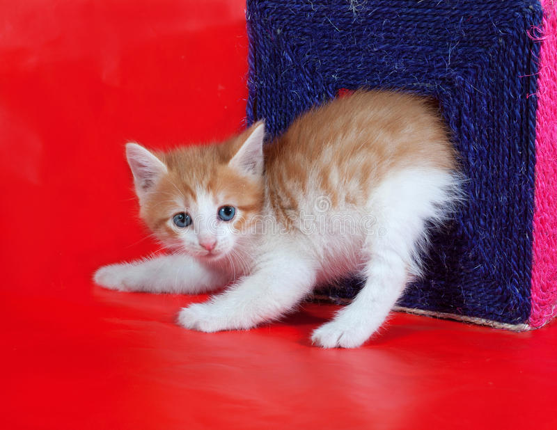 Kleines rotes und weißes Kätzchen verlässt ein Verkratzen von Beiträgen auf Rot stockfoto