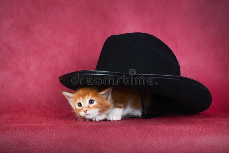 Kleines rothaariges Kätzchen, das heraus von unterhalb des Hutes späht stockfoto