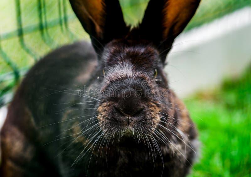 Kleines schönes Kaninchen auf grünem Gras, Bauernhofsäugetiere stockbild
