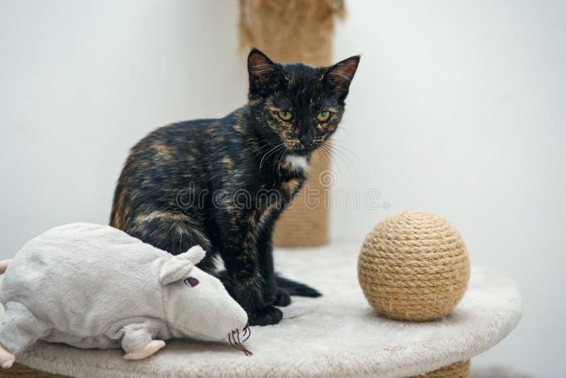 Kleines, schwarzes Kätzchen lizenzfreie stockfotografie