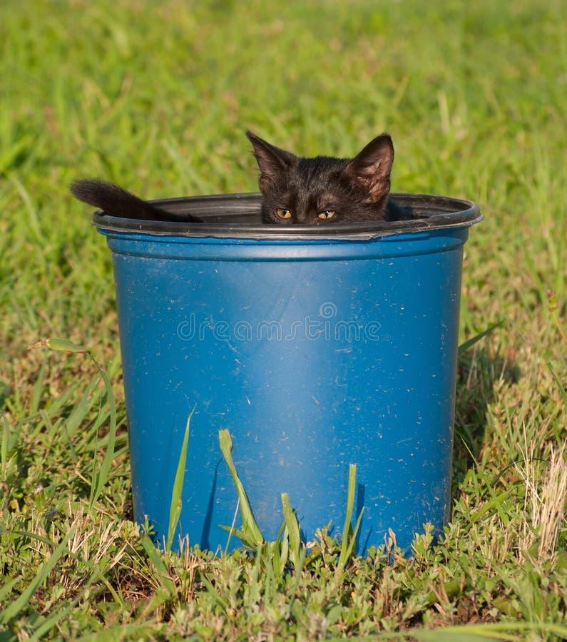 Kleines schwarzes Kätzchen in einem blauen Plastikeimer stockbilder