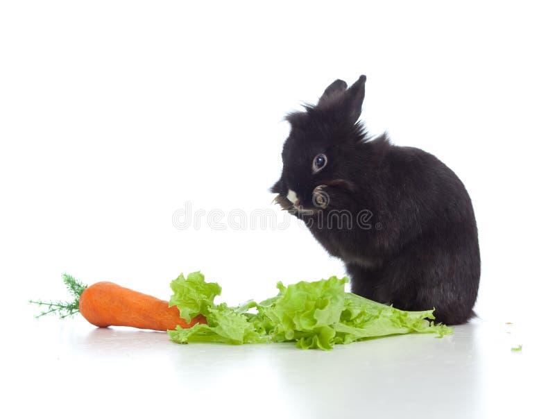 Kleines schwarzes Kaninchen mit Karotte und Kopfsalat lizenzfreies stockfoto