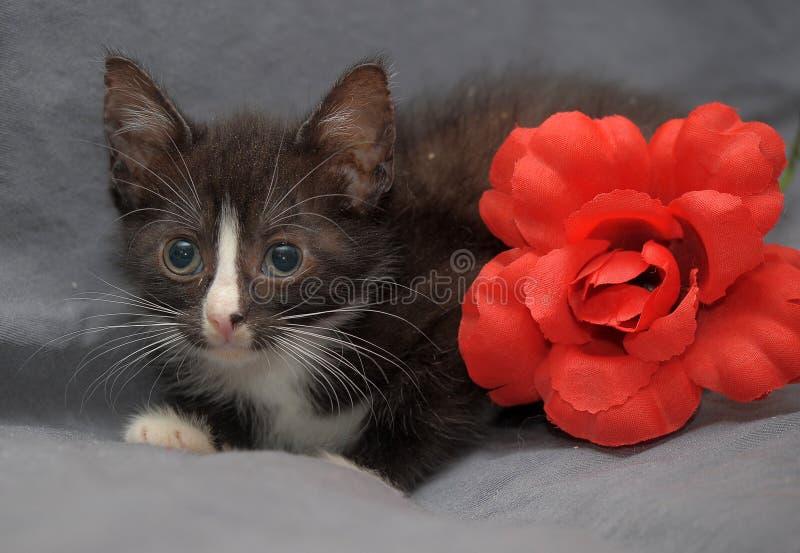 Kleines Schwarzweiss-Kätzchen und rote Blume stockfotos
