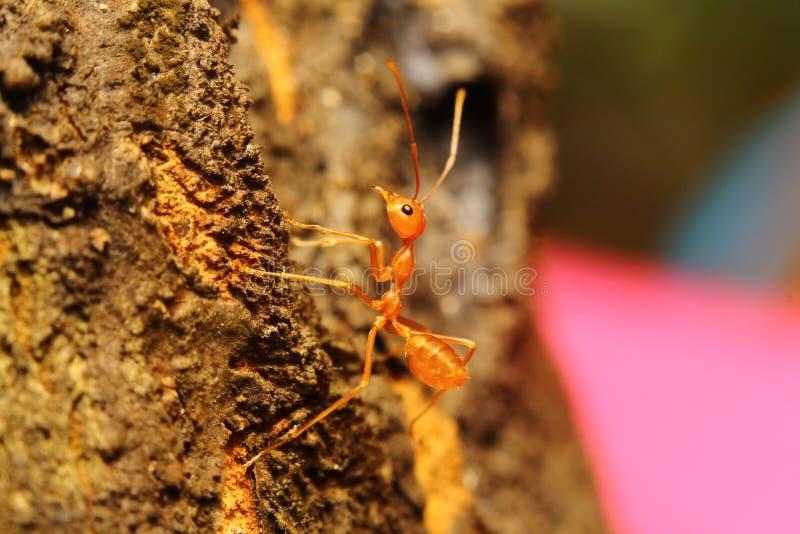 Kleines Tier des Insekts lizenzfreie stockfotografie