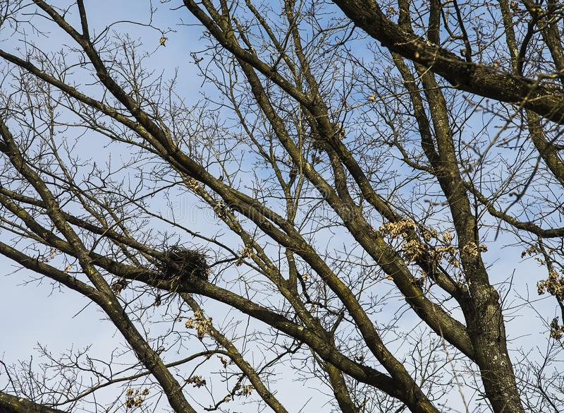 Kleines Vogelnest auf einem Baum stockbilder