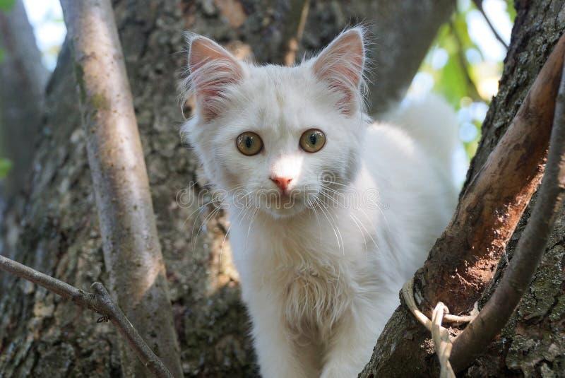 Kleines weißes Kätzchen, das auf einem braunen Baum sitzt lizenzfreie stockfotos