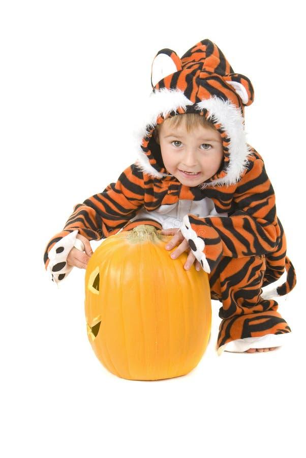 Kleinkind im Tiger-Kostüm über Kürbis lizenzfreies stockbild