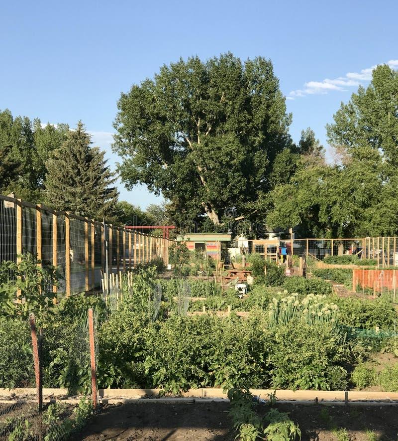 Kleinstadt-Gemeinschaftsgarten, Alberta, Kanada lizenzfreies stockbild