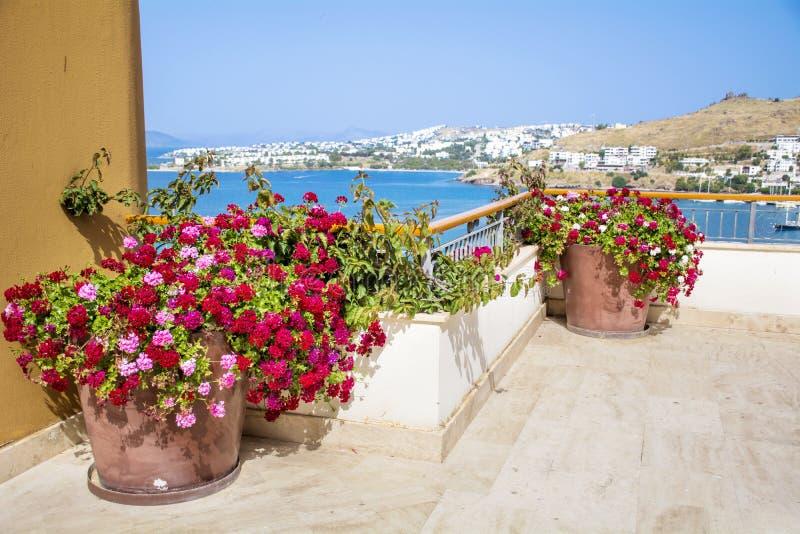 Kleipotten met geranium bloeiende bloemen op een terras met overzeese mening stock fotografie