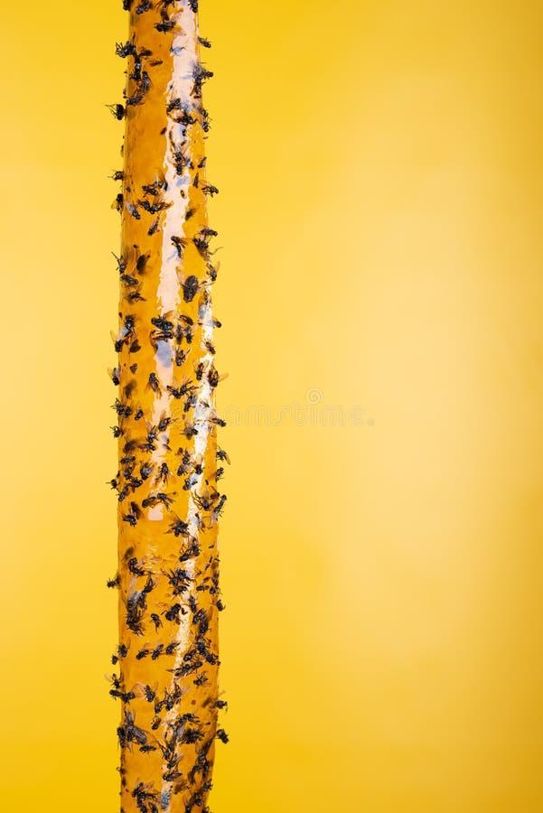 Kleisty flypaper, oklepiec dla komarnic lub killing przyrząd, żółty tło Także znać jako komarnica faborek lub komarnica pasek fotografia stock