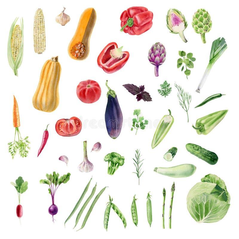 Klembord van met de hand geschilderde waterverf organische plantaardige cliparts vector illustratie