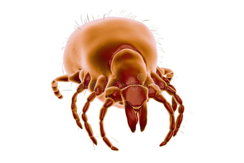 Kleszczowy Ixodes, członkonóg odpowiedzialny dla przekazu Lyme choroba ilustracji