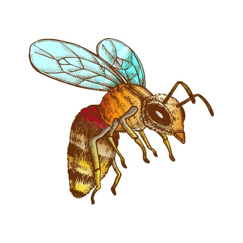 Kleur die Honey Bee Insect Gathering Nectar-Vector vliegen vector illustratie