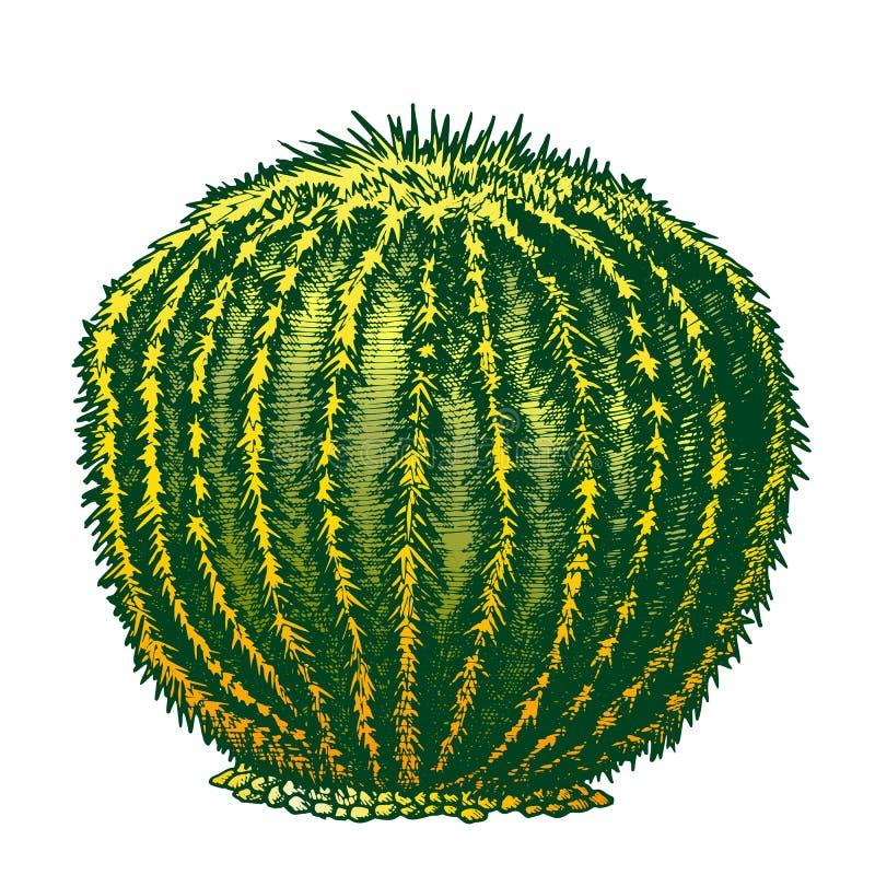 Kleur om van de de Cactusinkt van de Woestijninstallatie de Getrokken Vector Hand vector illustratie