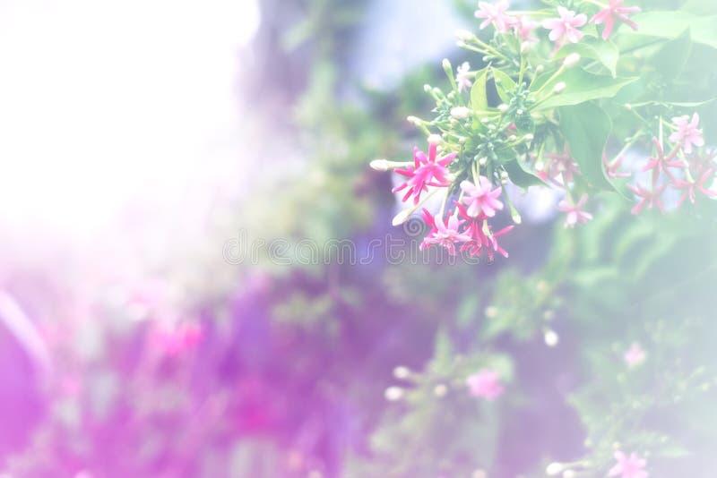 Kleur van de bloem met zachte of selectieve nadruk voor het gebruik van de achterzijde van wandpapier stock foto