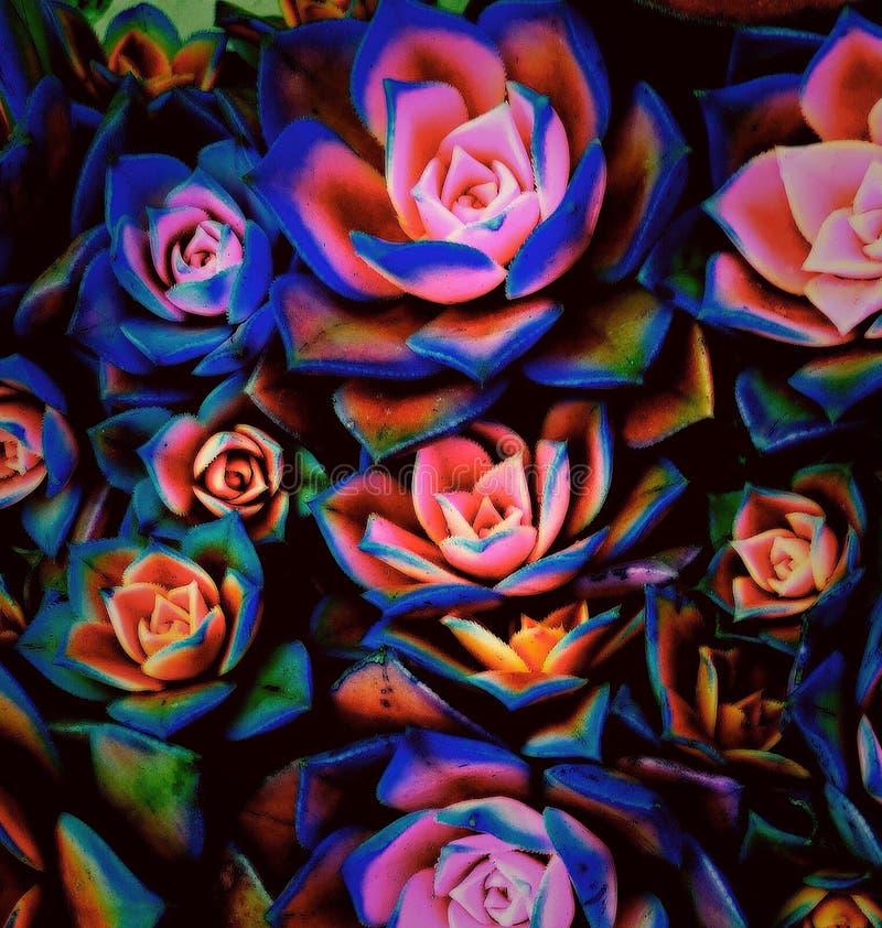 Kleur van een installatie stock afbeelding