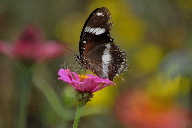 kleur van Vlinder royalty-vrije stock foto's