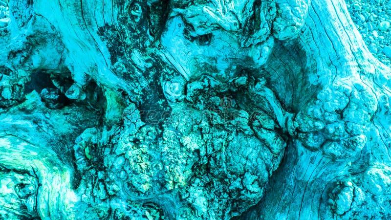 Kleurde de leeftijds knoestige boom, olijfboom, turkoois met kraakbeen, kraakbeen knotholes stock foto's