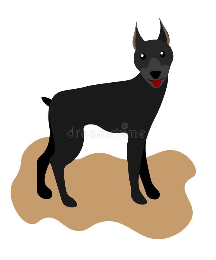 Kleurde Web doberman pinscher, Amerikaanse doberman, huisdierenembleem, doberman hond, huisdieren voor ontwerp, kleurenillustrati vector illustratie