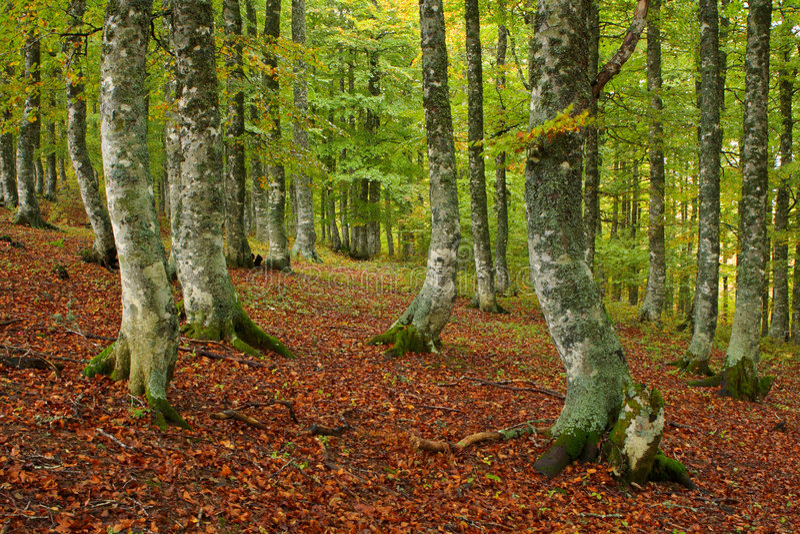 Kleuren in de herfst stock afbeeldingen