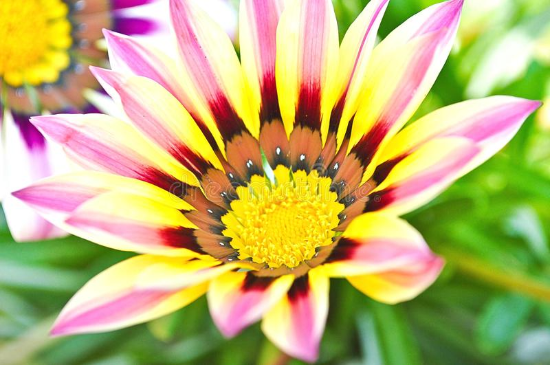 Kleuren en schoonheid van de bloemen royalty-vrije stock fotografie