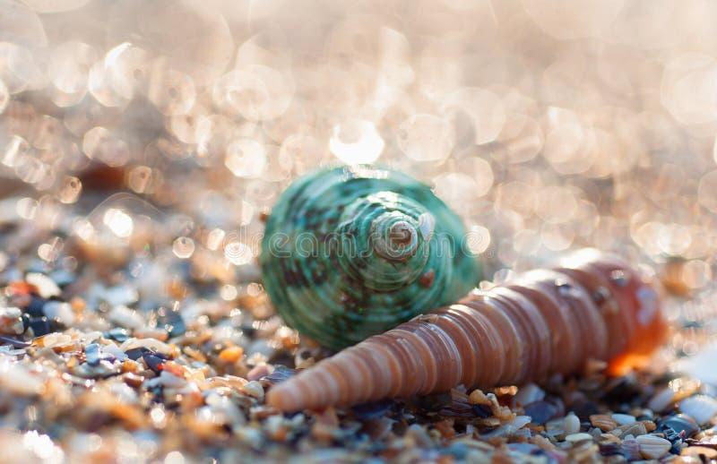 Kleuren overzeese shell stock fotografie