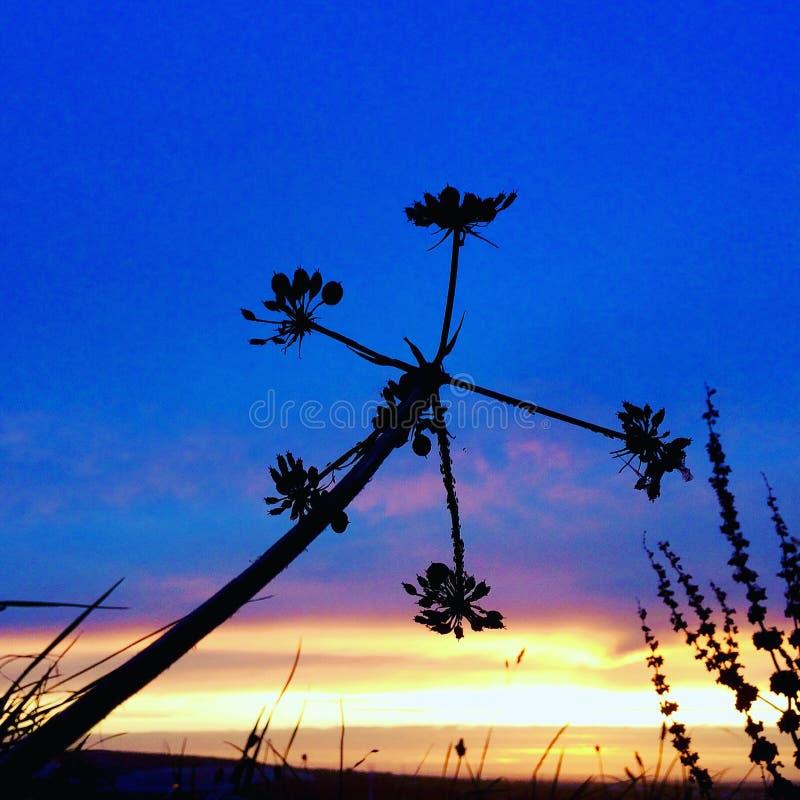 Kleuren van Cornwall magisch in schaduwen stock afbeelding