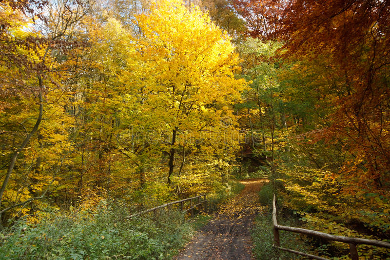 Kleuren van de Herfst royalty-vrije stock afbeelding