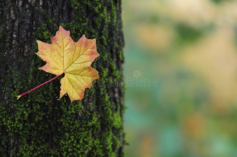 Kleuren van de herfst stock fotografie