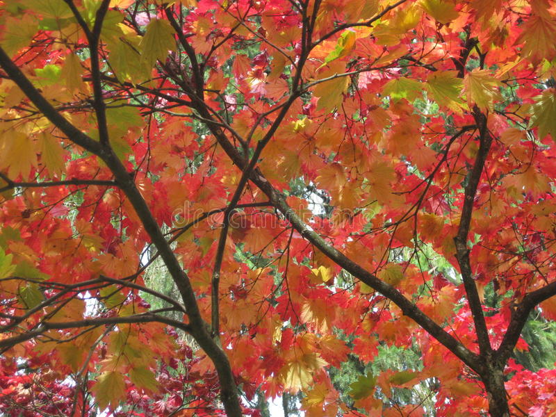 Kleuren van de Herfst/Daling stock afbeelding