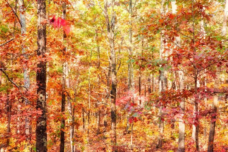 Kleuren van de herfst of daling van bos stock foto