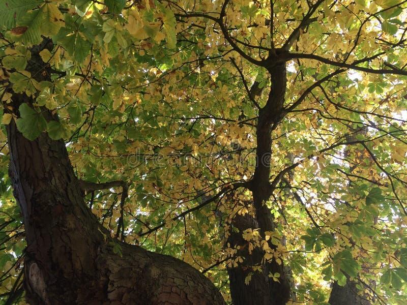 Kleuren van de Herfst/Fall4 royalty-vrije stock foto