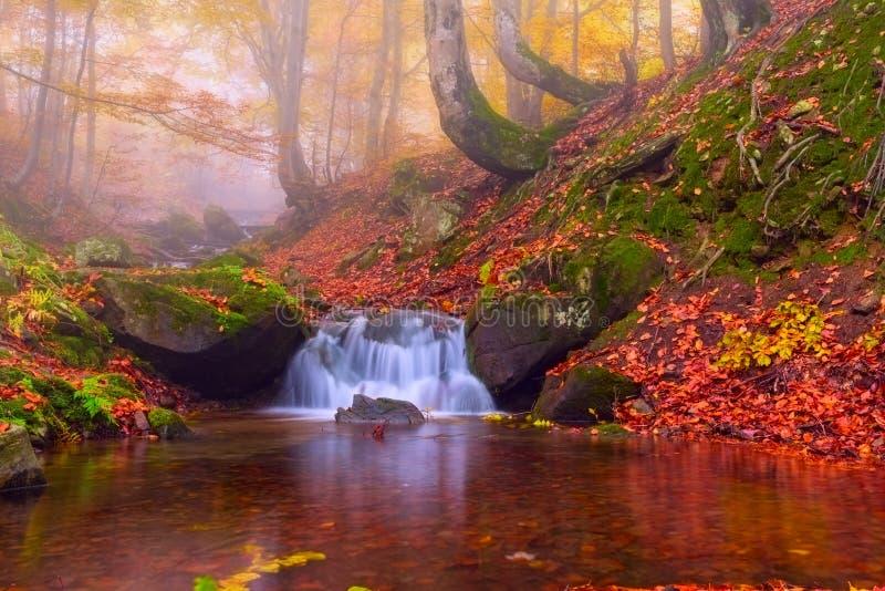 Kleuren van de herfst mistig bos met bergwaterval royalty-vrije stock afbeeldingen